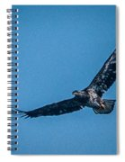 Immature Bald Eagle In Flight Spiral Notebook