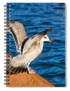 Immature Herring Gull At The Harbour Spiral Notebook