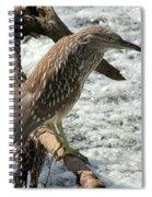 Immature Night Heron Spiral Notebook