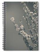 In A Beautiful World Spiral Notebook