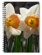 In Conversation - A Couple Of Daffodils Huddled Together Spiral Notebook