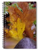 In Eveything Beauty Abides Spiral Notebook