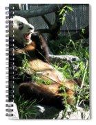 In Need Of More Sleep. Er Shun Giant Panda Series. Toronto Zoo Spiral Notebook
