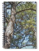 In New Jersey's Pinelands Spiral Notebook