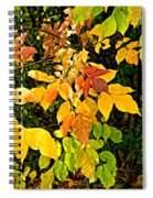 In Praise Of Yellow Spiral Notebook