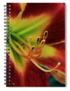 In The Ant's Eye Spiral Notebook