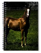 In The Corral 1 - Featured In Comfortable Art And Wildlife Groups Spiral Notebook