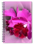In The Pink Spiral Notebook