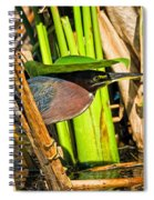 In The Shade Little Green Heron Spiral Notebook