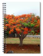 In The Shade Of The Poincianas Spiral Notebook