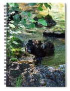 In The Shadows Of The Creek Spiral Notebook