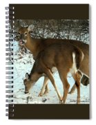 In The Snow At Sunset Spiral Notebook