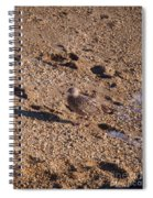 In The Stone Surf Gravel Cape May Nj Spiral Notebook