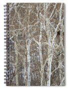 In The Sycamores Spiral Notebook
