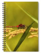 In The Tall Grass Spiral Notebook