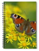 Inachis Io Butterfly On The Yellow Flowers Spiral Notebook