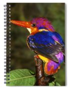 India Three Toed Kingfisher Spiral Notebook