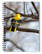Indian Golden Oriole Spiral Notebook
