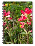 Indian Paintbrush Spiral Notebook