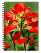 Indian Paintbrush I I Spiral Notebook