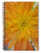 Indian Painter Spiral Notebook