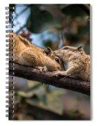 Indian Palm Squirrel Spiral Notebook