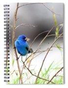 Indigo Bunting - 17 Spiral Notebook