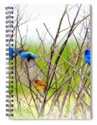 Indigo Bunting - 4 Spiral Notebook