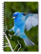 Indigo Bunting Alighting Spiral Notebook