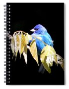Indigo Bunting - Img 423-008 Spiral Notebook