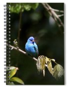 Indigo Bunting - Img-428-003 Spiral Notebook