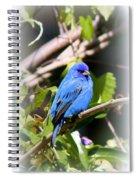 Indigo Bunting - Img 431-007 Spiral Notebook