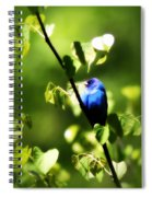 Indigo Bunting - Img_459-002 Spiral Notebook
