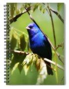 Indigo Bunting- Img_494-006 Spiral Notebook