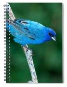 Indigo Bunting Passerina Cyanea Spiral Notebook