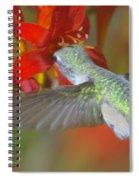 Indulgence  Spiral Notebook