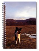 Indy On The Glan Y Mor Elias. Spiral Notebook