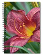 Inflamed - Lily Spiral Notebook