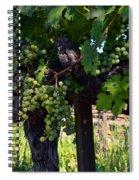 Inglenook Vineyard -11 Spiral Notebook