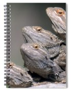 Inland Bearded Dragons Spiral Notebook