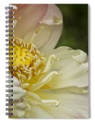 Inner Beauty Of The Lotus Spiral Notebook