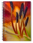 Inner Beauty Spiral Notebook