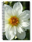 Innocent White Spiral Notebook