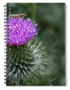 Insect On A Thistle Spiral Notebook