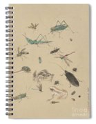 Insects C1825 Spiral Notebook