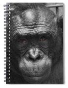 Intelligent Eyes Spiral Notebook