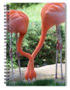 Intertwined Flamingoes Spiral Notebook