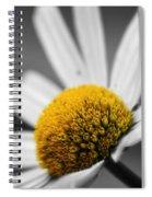 Intimate Daisy Spiral Notebook