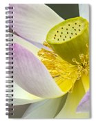 Intimate Sacred Lotus Bloom Spiral Notebook