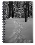 Into The Woods Pisgah Forest Black And White Spiral Notebook